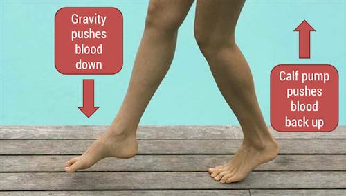 Quitting Sitting Calf Pump Vascular Hemodynamics for Dummies