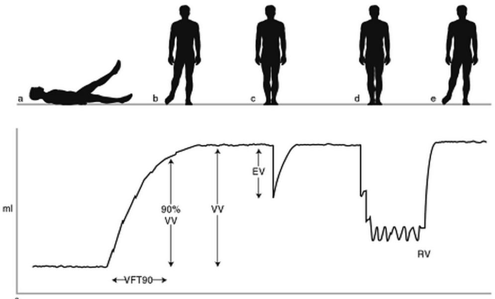 Quitting Sitting Calf Pump Venous Volume Vascular Hemodynamics for Dummies