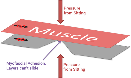 quitting sitting ruins your running form myofascial adhesions foam rolling stuck together