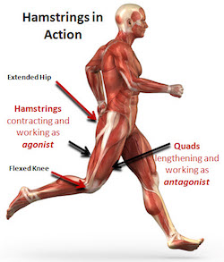 quitting sitting downside of treadmill desks are bad ergonomics cognitive load bad practice unhealthy running hamstrings